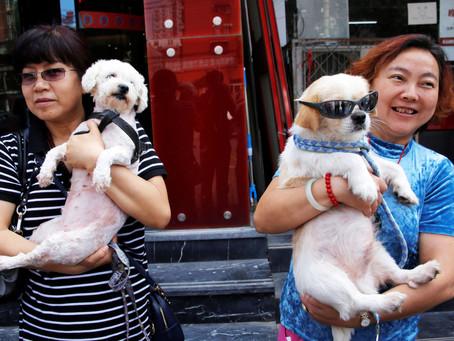 O crescente amor por cães e gatos, e as consequências do covid-19 fez a China fazer algo inédito