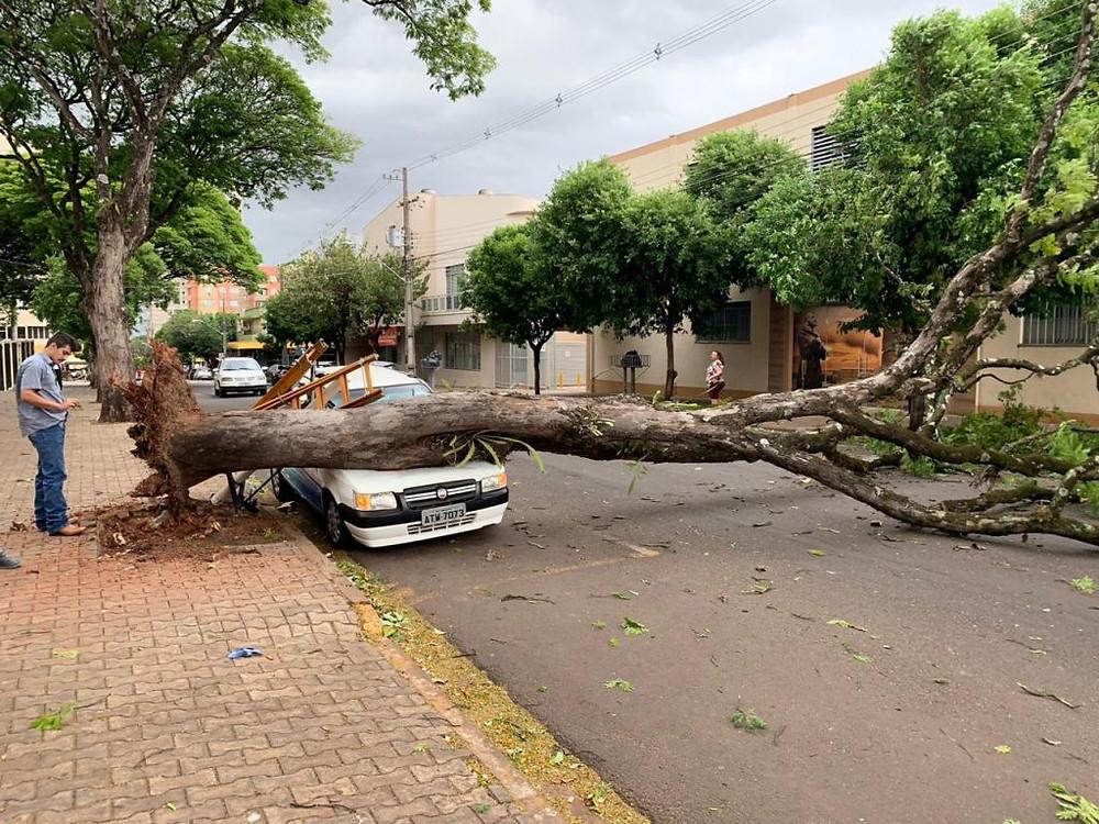 (Foto: Reprodução / Portal da Cidade de Umuarama)