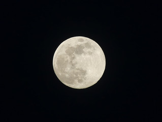 La luna de flores