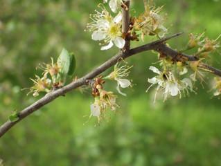 La primavera ha llegado a la Herrería