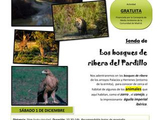 Los Bosques de Ribera del Pardillo