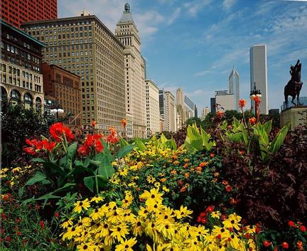 flowers-in-a-park-grant-park-michigan-av