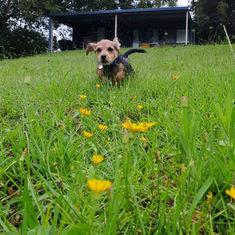 Myra Wickham - Puppy.jpeg