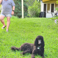 Mr & Mrs Deborah Crompton Whipbird Puppy