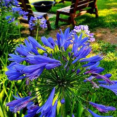 Ros Green - Flowers.jpg