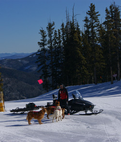 All the dogs want a snowmobile ride!