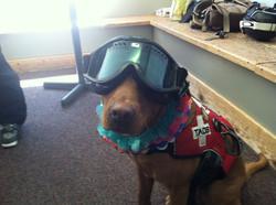 Style puppy