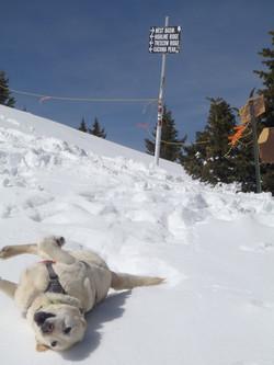 Hattie loves rolling in the snow!