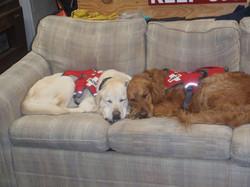 Hattie and Ozlo cuddling.