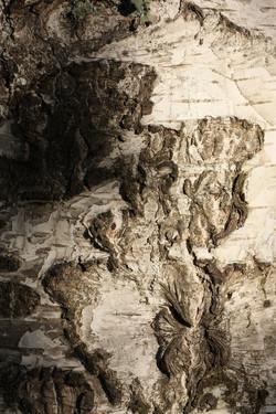 White birch...