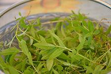 צמחי מרפא - לואיזה