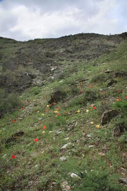 Клон - левый берег ручья Беркара
