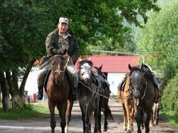 Из конюшни