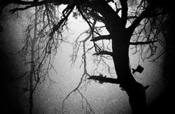 06_Whale_tree