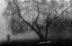 01_Whale_tree