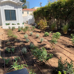 Installation of Irrigation system, trees and plants