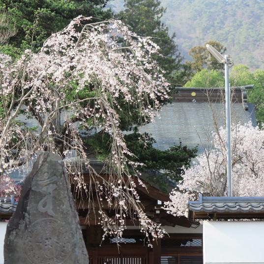 小泉の高仙寺1