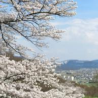 小泉の高仙寺3