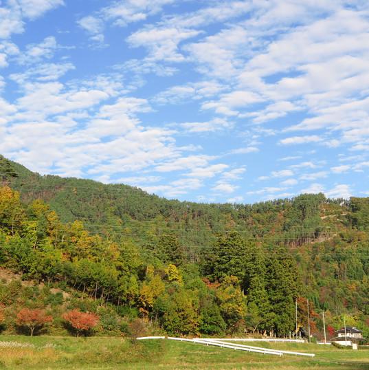 室賀の紅葉と秋空