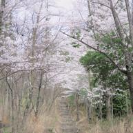 仁古田の愛宕山1