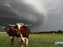 Oklahoma Longhorns WW OP.jpg