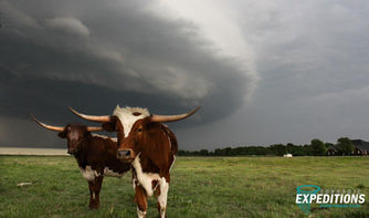 Texas Longhorns and Supercell