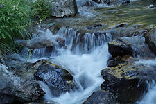 Naturopatia omeopata zona Lugano Ticino