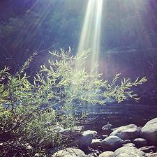 Naturopatia terapia biorisonanza Lugano