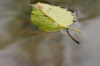 Naturopatia studio biorisonaza Lugano
