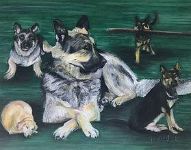 Five Dogs Pet Portraits.jpg