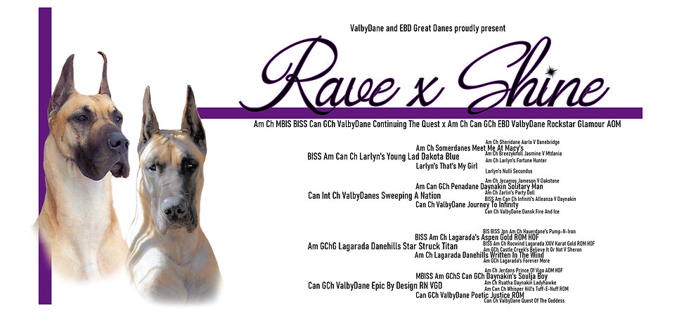 Rave x Shine Pedigree.jpg