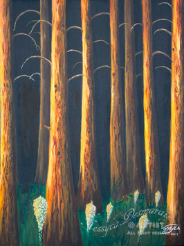 Pines in the moonlight