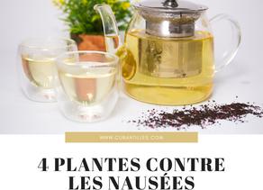 Ces plantes contre les nausées