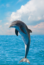 dolphin 2.png