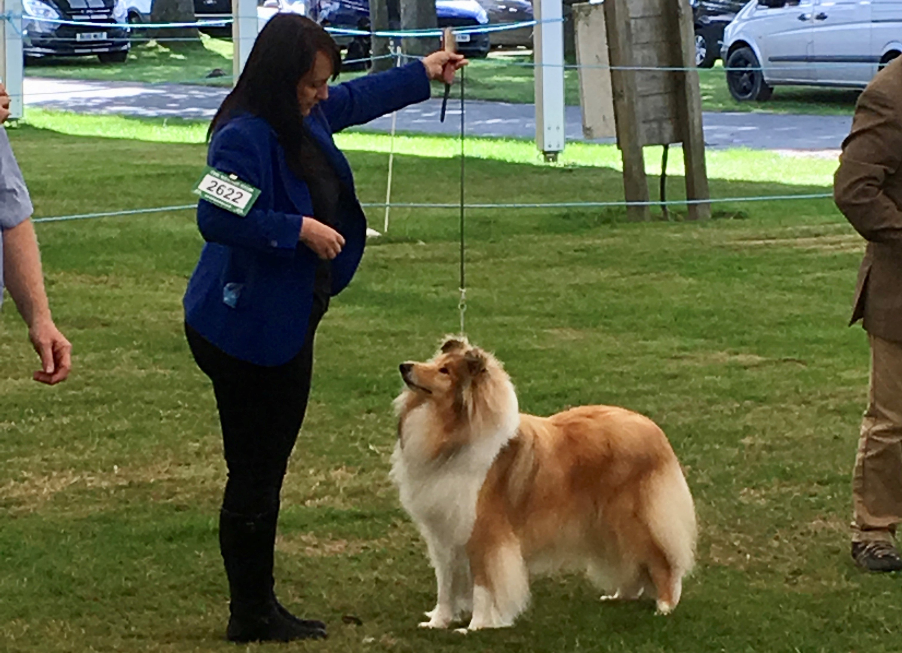 Polly Welsh Kennel 2019_edited