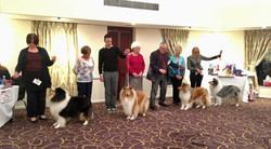 Rough Collie of the Year