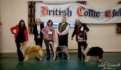 Bella Best in Show British Collie