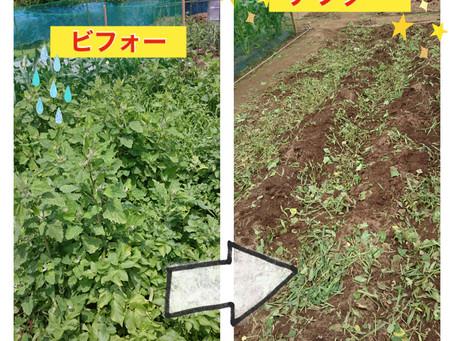 畑の整備&収穫
