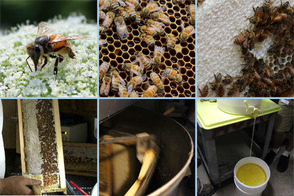 Mommy, where does honey come from?
