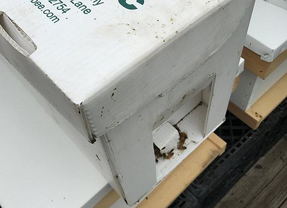 Nucleus Hives