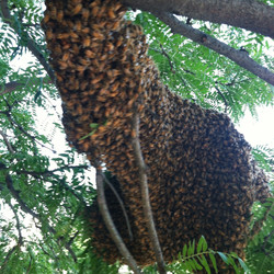 Swarms and Removals