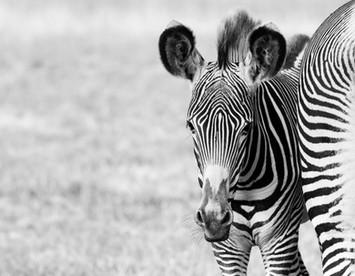 Bedfordshire School Of Photography Wildlife Photography