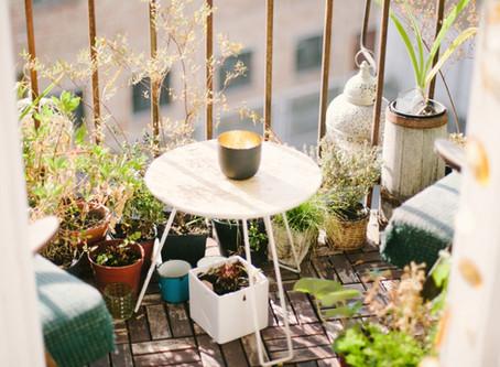 Come curare le piante d'estate.