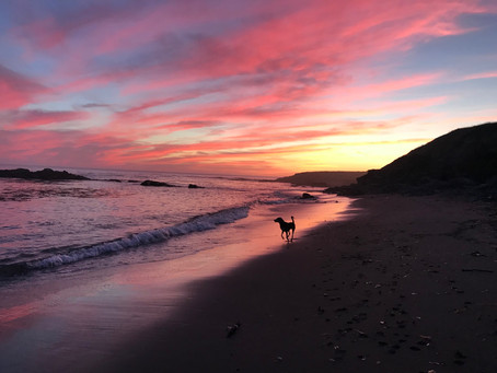 Places to Bring Your Dog in Sonoma County