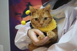 pawsarotti cat