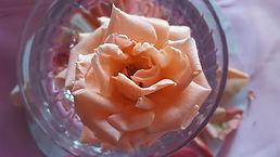 petals-3183331_640.jpg