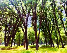 Yosemite Grove