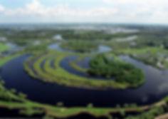 болото.jpg