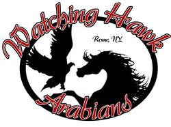 watching hawk