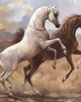 arabian-horses-in-desert.jpg